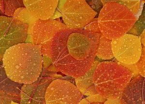 autumn_leaves_320